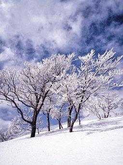 Snow, Rime, Trees, Cloud, Blue Sky, Shirakami-sanchi