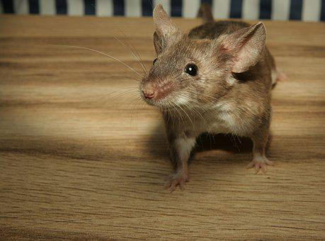 Mouse, Color Mouse, Wood, Cute, Sweet, Small