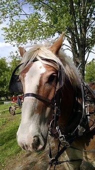 Amish, Horse, Farm, Rural, County, Barn, Animal