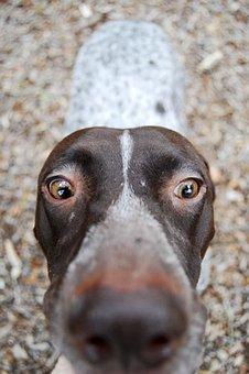 Dog, Depth Of Field, Animal, Pet, Cute, Puppy, Canine