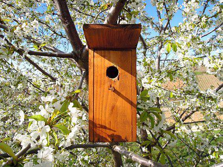 Bird's Lair, Bird House, Odu, Bird, Nature, Bough
