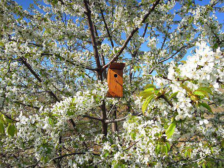 Flowering Tree, Bough, Bird's Lair, Bird House, Odu