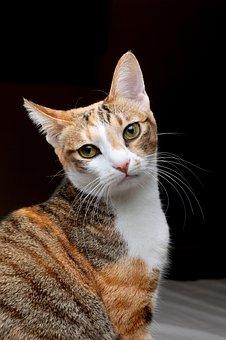 Cat, Pet, Note Reviews