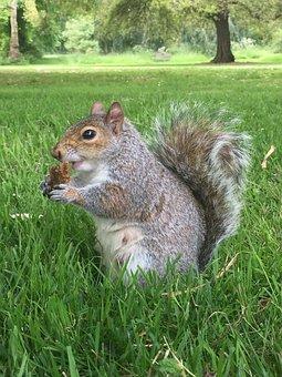 Squirrel, Obesity, Eating, Food, Nature, Animal