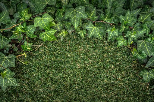 Ivy, Plants, Grass, Nature, Abstract, Green, Leaf, Herb