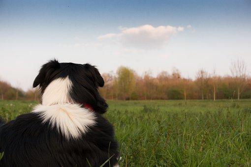 Dog, Landscape, Hats, Watch, Fun, Golden Retriever