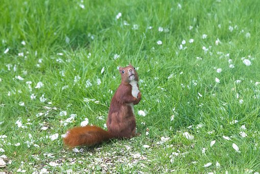 Squirrel, Expensive, Have, Natural, Denmark, Grass