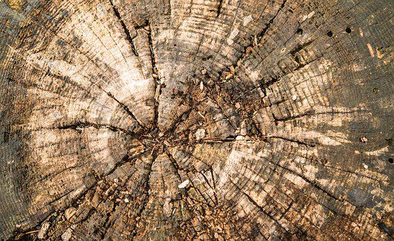 Wood, Log, Texture, Wood Structure, Tree Stump