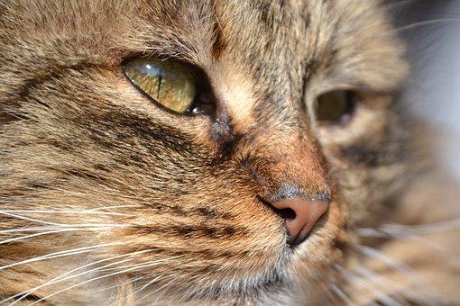 Cat, Mackerel, Grey, Mieze, Domestic Cat, Animal