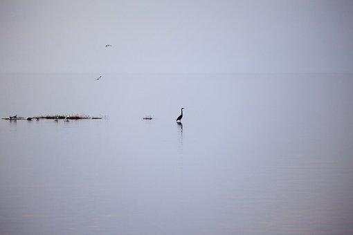 Lake, Silent, Rest, Meditation, Nature, Water