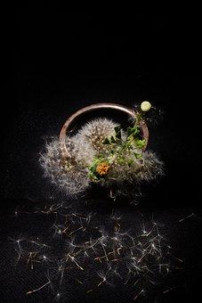 Dandelion, Still Life, Composition, Staging, Flowers