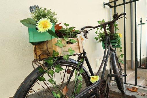 Bike, Flowers, Old, Park, Seal, Vegetation, Plant