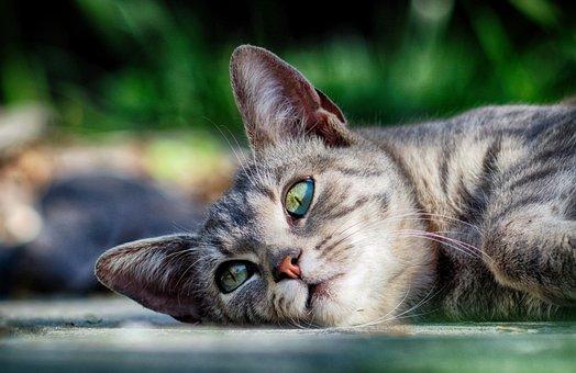 Cat, Rest, Kitten, Animal, Relax, Peaceful, Cute