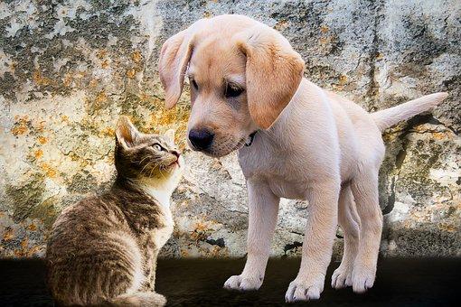 Animals, Dog, Cat, Puppy, Young, Playful, Curiosity