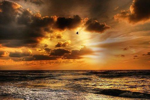 Seagull, Sunset, Denmark, Bird, Evening Sky, Beach, Sea