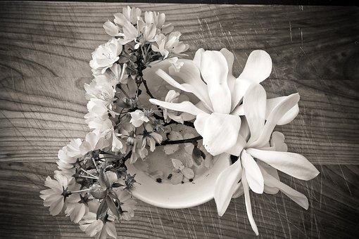 Magnolia, Cherry Blossom, Flower, Blossom, Bloom