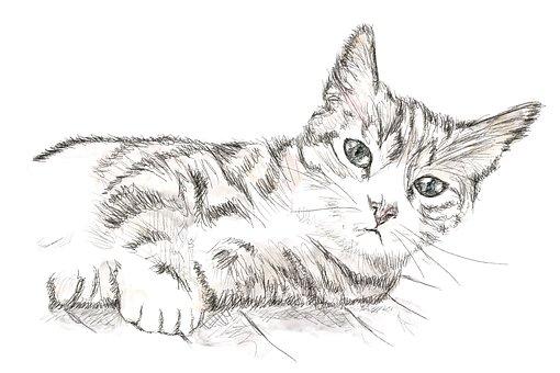 Cat, Kitten, Perokresba, Drawing