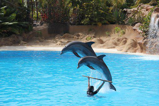 Loro Parque, Tenerife, Dolphin