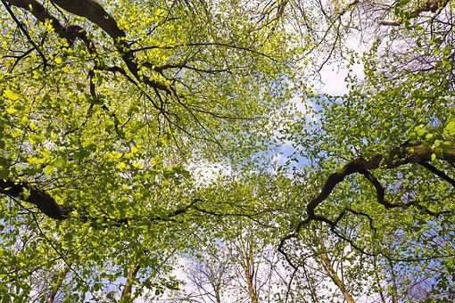 Trees, Leaves, Landscape, Green, Nature, Summer, Canopy
