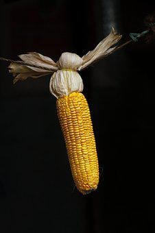 Maize, Grains, Corn, Food, Yellow, Seed, Organic