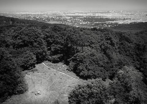 Vienna, Austria, Forest, Glade, View, Wienerwald, Path