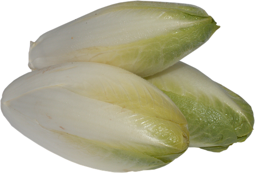 Chicory, A Vegetable, Foliage, Vegetables, Cabbage