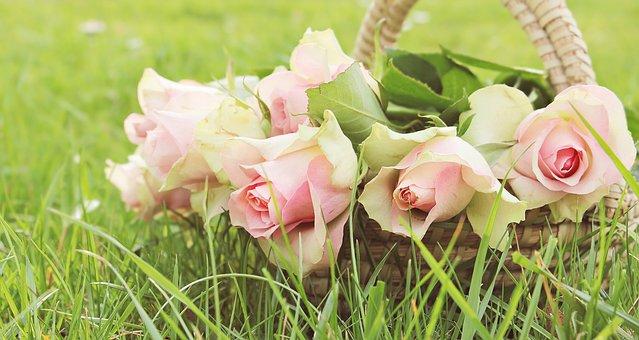 Roses, Noble Roses, Basket, Flowers, Pink, Pink Roses