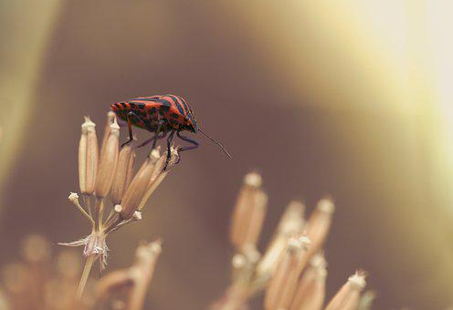 Strip Bug, Bug, Insect, Striped, Nature, Insect Photo