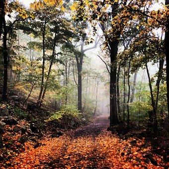 Hike, Trail, Woods, Hiking, Nature, Adventure, Travel