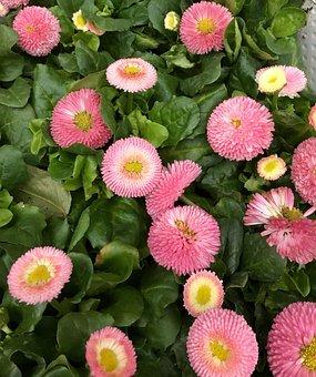 Flowers, Blomsterplantering, Pink Flower, Spring
