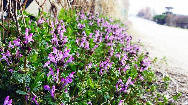Spring Flowers, Wildflower, A Clown Or Animal, Jeonju