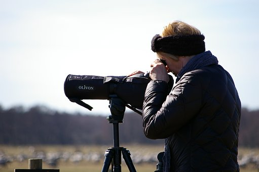 Binoculars, Bird Watchers, Focused, Woman, Leisure