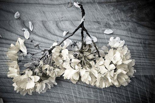 Church Flower, Plant, Still Life, Flowers, Deco, Wood