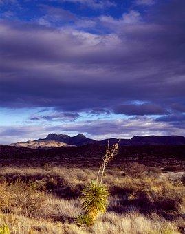 Cactus, Desert, Texas, Prairie, Usa, America