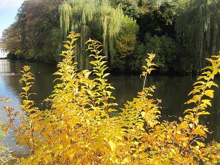 Autumn Mood, Autumn Idyll, At The Pond, Fall Color