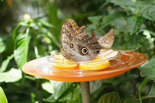 Butterfly, Garden, Nature, Summer, Botanical Garden