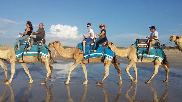 Camel, Camel Ride, Ride, Adventure, Vacation