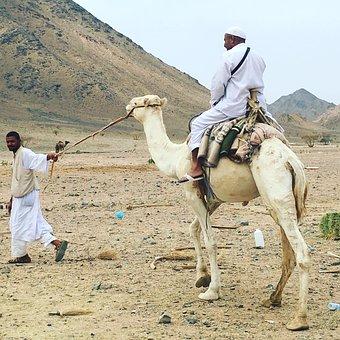 Camel, Herder, Mountain, Desert