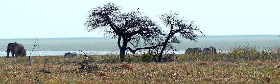 Etosha, Elephant, Steppe, National Park, Safari