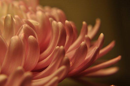Floral, Petals, Flowing, Spring, Botanical, Nature