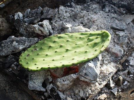 Cactus, Prickly Pear, Leaf, Coals, Cooking, Pear