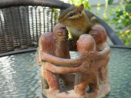 Chipmunk, Friends, Posing, Striped, Rodents, Table