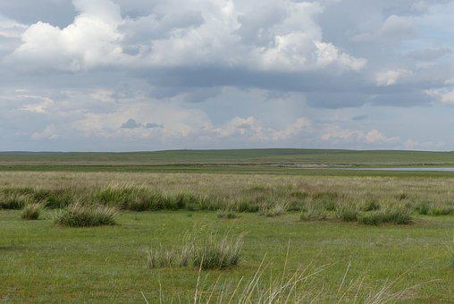 Grass, Prairie, Steppe, Mongolia, China, Wide