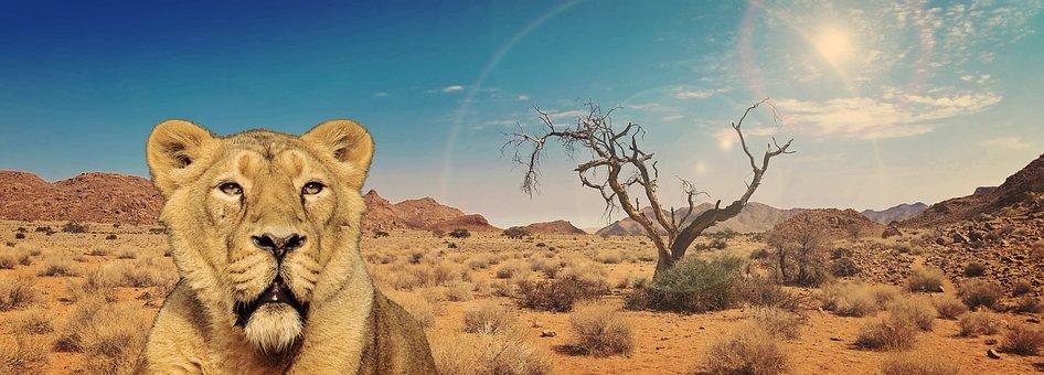 Lion, Lioness, Predator, Cat, Africa, Animal
