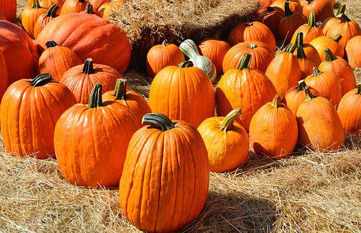 Pumpkins, For Sale, Sell, Farm, Food, Agriculture, Sale