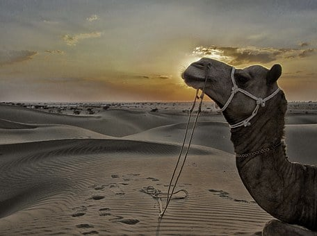 Jaisalmer, Sam Sand Dunes, Sand Dunes, Desert