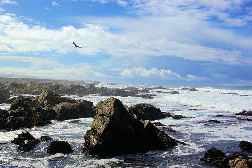 Talahi, Coastal, Coast, Beach, Waves, Ocean, Sea, Water