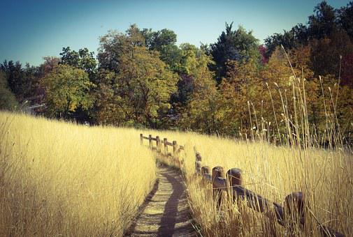 Boise, Camel's Back, Fall, Autumn, Foothills, Trail