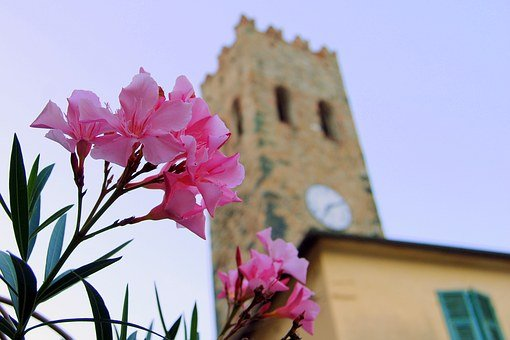Flower, Torre, Watch, Medieval, Campanile, Cinque Terre
