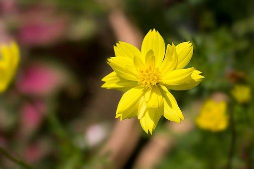 Flowers, Wood, Catharanthus Roseus, Nature, Yellow